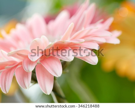 Pink daisy gerbera flower background - stock photo