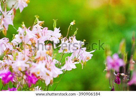 Pink delicate flower meadow, close-up, summer day - stock photo