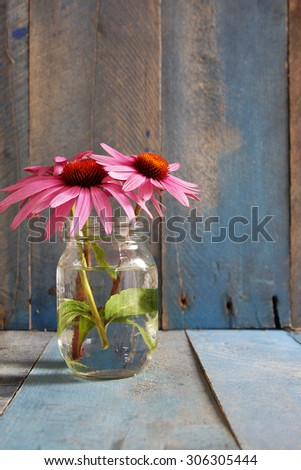 Pink echinacea flowers in glass jar on blue wood background vertical natural light