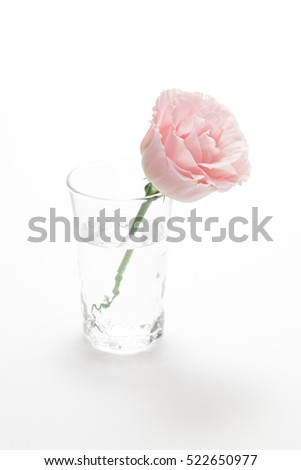 Pink Eustoma in glass