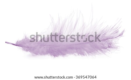 pink feather on the white background