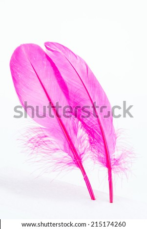 Pink feathers standing on white foam board close up  - stock photo