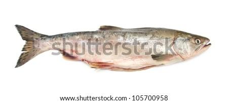 pink fish - stock photo