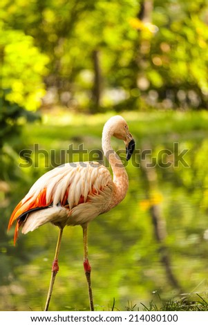 Pink flamingo against green background - stock photo