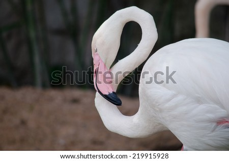 Pink flamingo and green background - stock photo