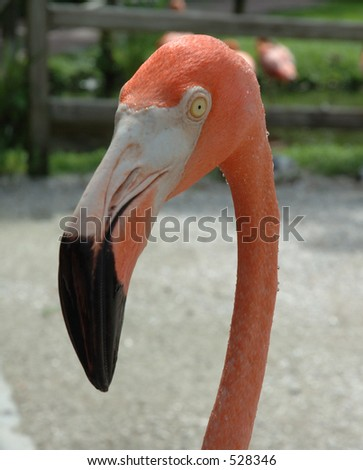 Pink Flamingo Head - stock photo