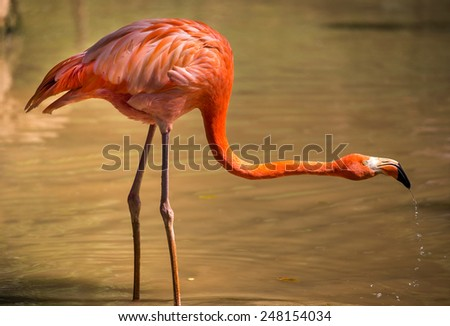pink flamingo stretched neck - stock photo
