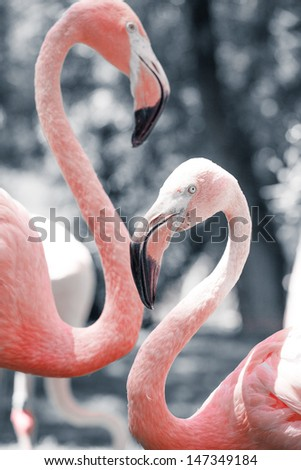 Pink flamingos against blurred background - stock photo