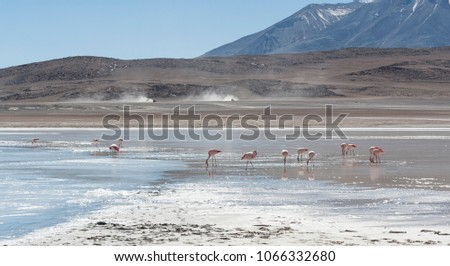 Pink Flamingos At Laguna Honda In English Deep Lagoon Sud Lipez
