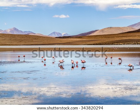 Pink flamingos in wild nature of Bolivia, Eduardo Avaroa National Park, South America - stock photo