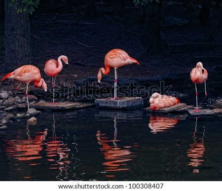 Pink flamingos sitting and standing on the edge of a pond