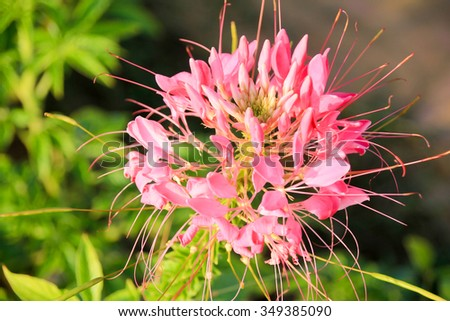 pink flora spot in  garden  - stock photo