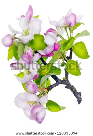 Pink floral new life isolated  concept on white concept - stock photo