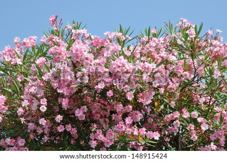 Pink flower against the blue sky  - stock photo