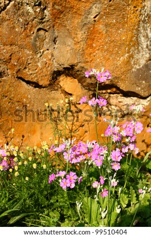 Pink flower background . - stock photo