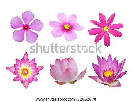 pink flower collection isolated in white background - stock photo