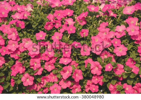 Pink flower for background.