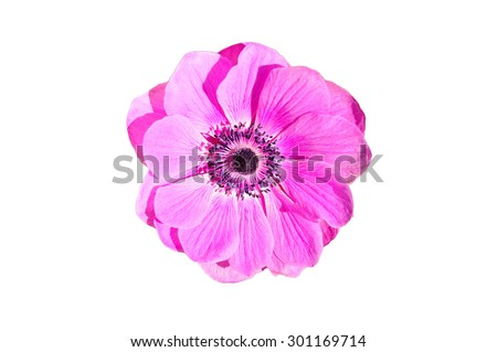Pink flower from the top isolated on white background. - stock photo