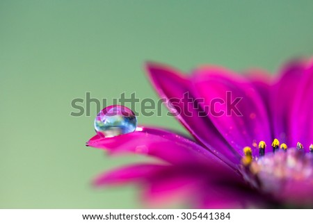 Pink flower, green background and droplet