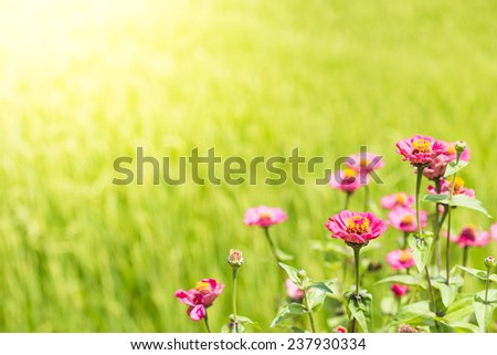 Pink Flower in Field - stock photo