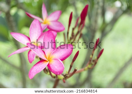 Pink flower in morning - stock photo