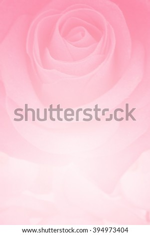 Pink flower in soft focus for background.