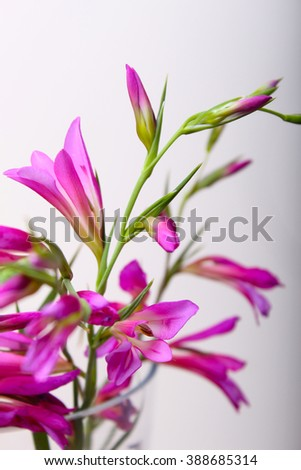 pink flower  in the vase