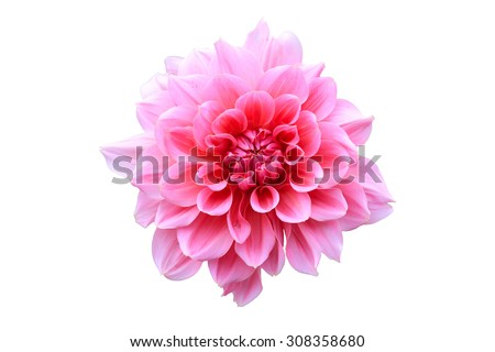 Pink Flower Isolate - stock photo