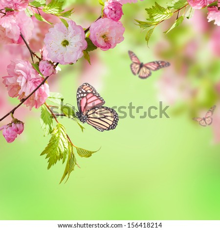 Pink flower of an Oriental cherry and butterfly;  - stock photo