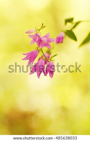 Pink flower with blur background - close-up photo