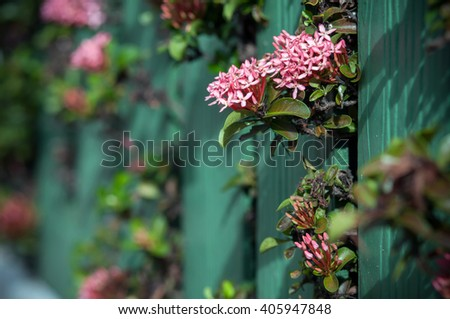 pink flower with green fence in the garden - stock photo