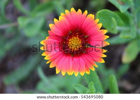 Pink flower yellow tips stock photo download now 543695080 pink flower with yellow tips mightylinksfo