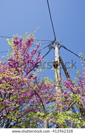 Pink flowering bush by electricity pole against blue sky on sunny day - stock photo