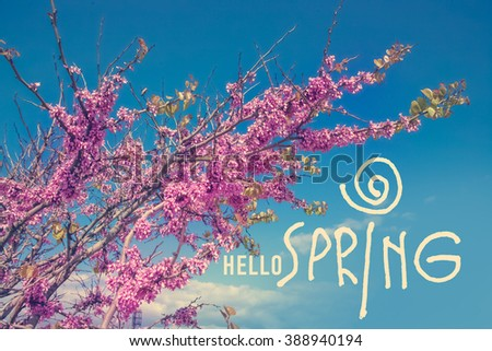 Pink flowering tree on a background of blue sky  with discription Hello Spring - stock photo