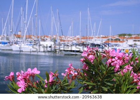 pink flowers at the port, Croatia - stock photo