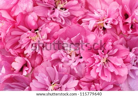 Pink flowers background - stock photo