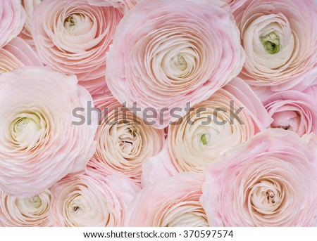 Pink Flowers.Background of delicate pink flowers. - stock photo
