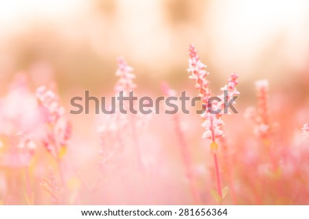 pink flowers(blurry background) - stock photo