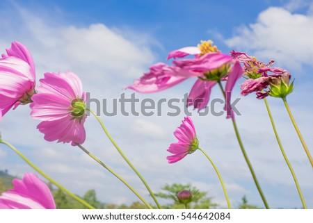 Download wind flower ye sung pink hair