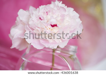 Pink Flowers in a glass vase, isolated against dark pink