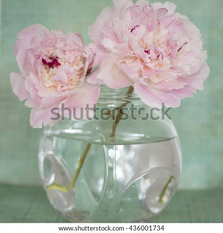 Pink Flowers in a glass vase,  isolated against pale green - stock photo