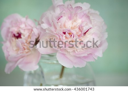 Pink Flowers in a glass vase,  isolated against pale green.
