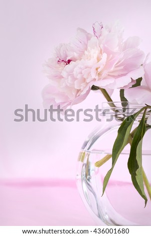 Pink Flowers in a glass vase, isolated against pale pink - stock photo