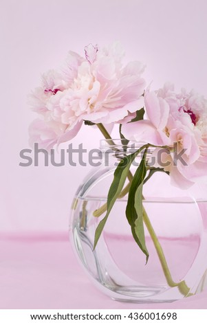 Pink Flowers in a glass vase, isolated against pale pink