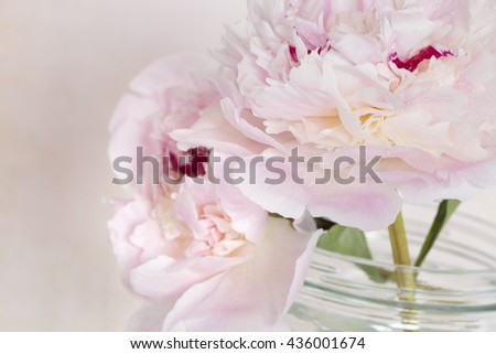 Pink Flowers in a glass vase, isolated against pink.
