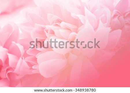 Pink flowers in soft style for background - stock photo