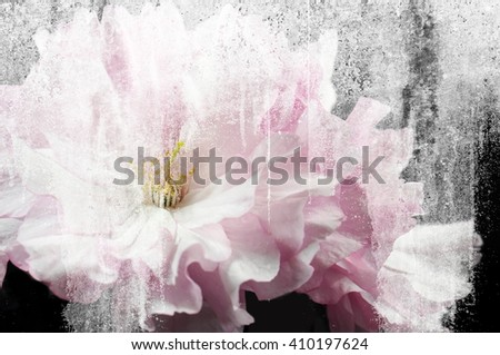pink flowers of Japanese cherry Sakura close-up. Vintage and damaged style. - stock photo