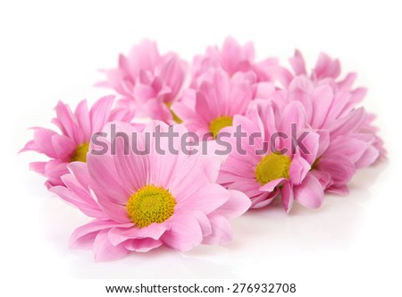 pink flowers on a white background - stock photo