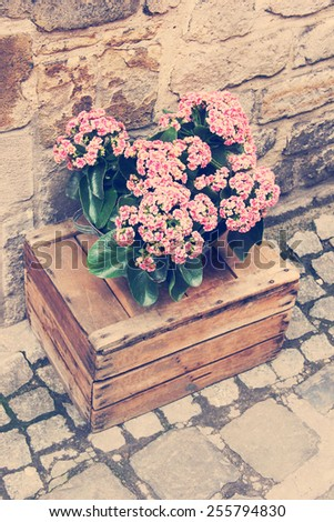 Pink flowers on a wooden crate. Vintage retro effect. - stock photo