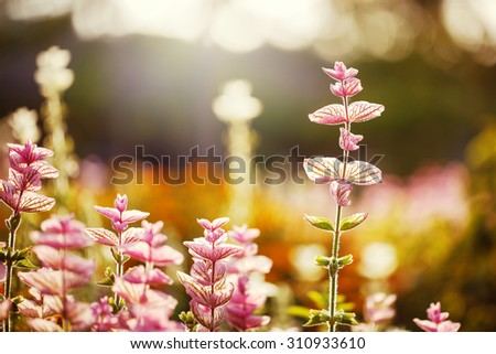 pink flowers on bright colorful nature background. Beautiful flowerbed in garden. Fresh calm autumn photo - stock photo